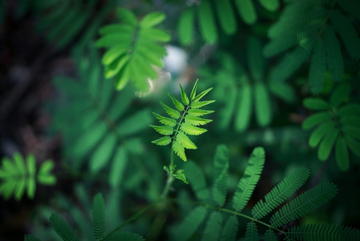 Wyjątkowe tarasy zielone